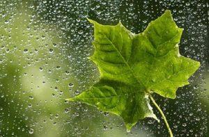 پیامک و اس ام اس روز باران