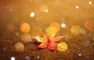 متن های زیبا و احساسی فصل پاییز