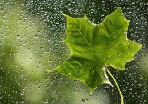 پیامک و اس ام اس روز های بارانی
